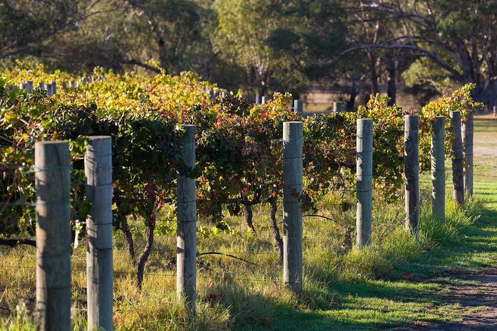 Edge of a vineyard